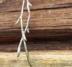 Necklace silver twig