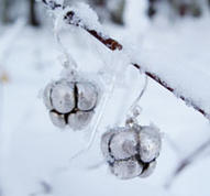 Silver cloudberry earrings